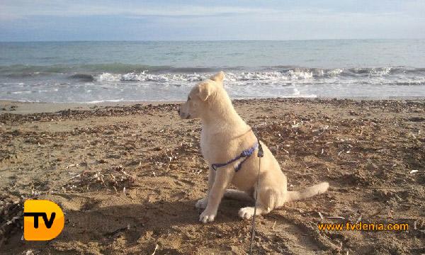 playa-perros