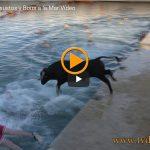 Este vídeo de Bous a la Mar ha tenido más de 6 millones y medio de visitas