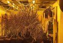 La Guardia Civil localiza una plantación indoor de marihuana de 500 metros cuadrados dentro de un chalet en Jávea