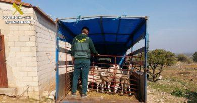 La Guardia Civil detiene a tres personas dedicadas al hurto y venta de corderos en la Marina Alta
