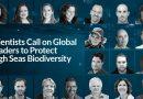 Marinas de España se adhiere a la carta que reclama a la ONU la protección de la biodiversidad en aguas internacionales