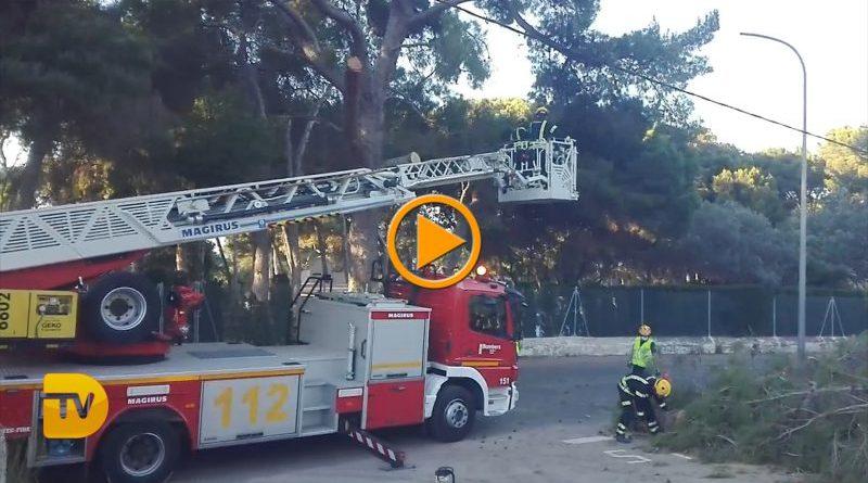 Nueva actuación de los bomberos en las Rotas para la retirada de grandes ramas