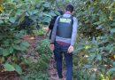 La Guardia Civil investiga el robo de aguacates en la Marina Alta y Marina Baja