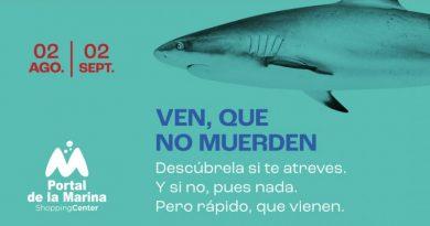 Portal de la Marina presenta la exposición más realista de tiburones
